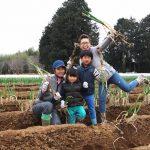 ねぎの収穫体験